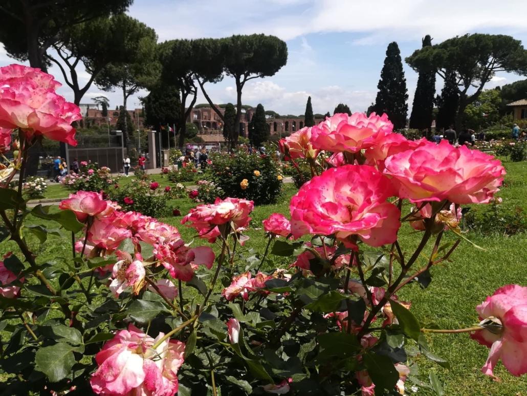 Municipal Rose Garden of Rome, Photography, Tatjana Meier