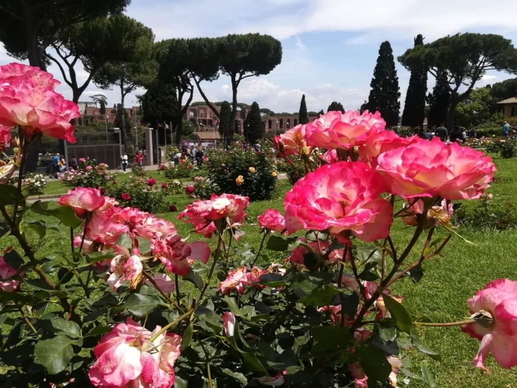 Roseto Comunale di Roma, fotografia Tatjana Meier